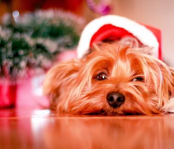 Dags för Jullov..